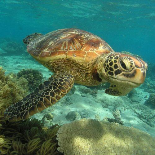 airbnb management Cairns